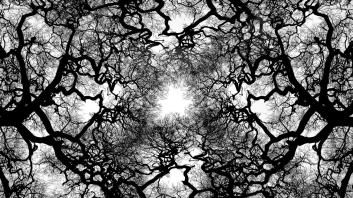 Black-And-White-Tree-Wallpaper-03