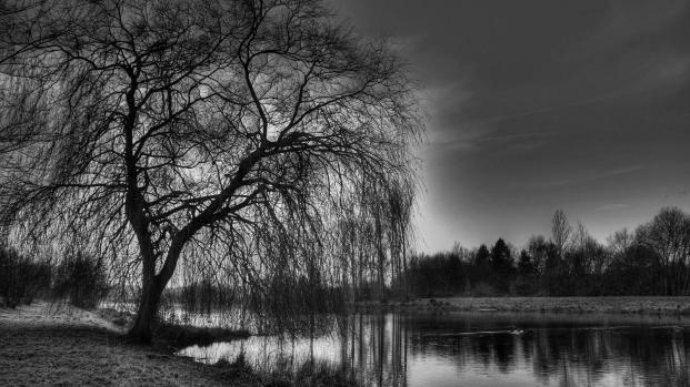 weeping willow and pond